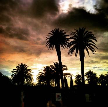 Coucher de soleil sur les palmiers de Porquerolles